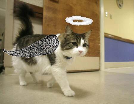 Oscar The Angel Cat